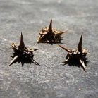538890d1272255494-goat-head-thorns-dealing-natures-tire-spikes-goat_head_thorns